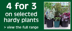 Hardy plant special offer