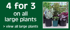 Large Potted Plant Special Offer
