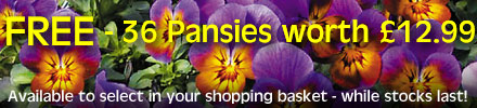 FREE 36 Trailing Pansies worth £12.99 with this wall planter - simply select in your shopping basket