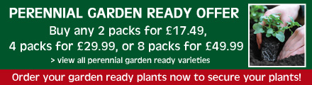 Perennial garden ready special offer