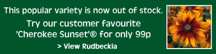 Try our customer favourite Rudbeckia 'Cherokee Sunset'® for 99p