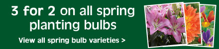 3 for 2 on spring planting bulbs