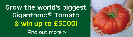 Tomato Gigantamo® Competition
