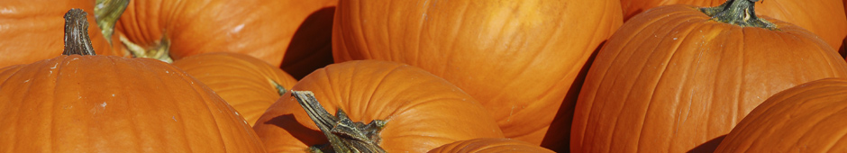 Small pumpkins? Read on for some inspiration!