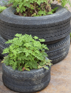 Old tyres are ideal for turning into raised beds or compost bins