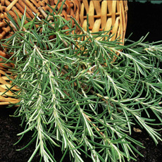 Herbs such as sage, thyme and rosemary are ideal for sandy soils