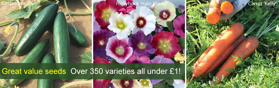 Over 350 varieties all under £1!