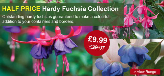 Hardy Fuchsias Collection