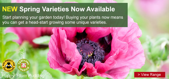 View the new 2013 spring plant varieties