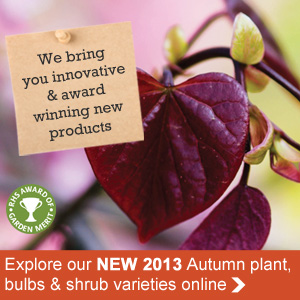 New autumn plants, bulbs and shrubs