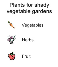 Plants for shady vegetable gardens - Vegetables, Herbs and Fruit