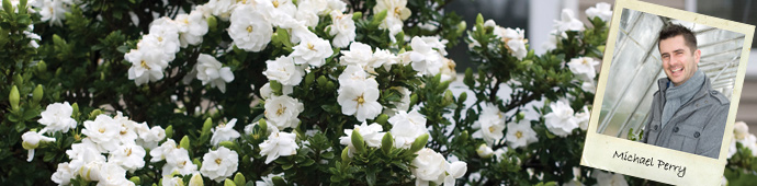 Michael Perry's Top 5 Shrub Recommendations
