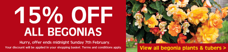 15% OFF all begonias