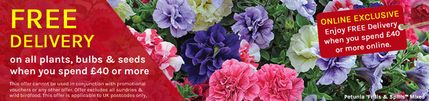 Free Delivery when you spend £40 or more on plants, bulbs & seeds