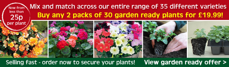 2 packs of 30 garden ready plants now £19.99