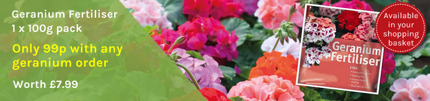 Geranium fertiliser 99p with any geranium order