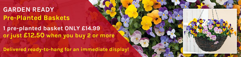 Buy 2 or more Garden Ready Pre-Planted Baskets for ONLY £12.50 each!