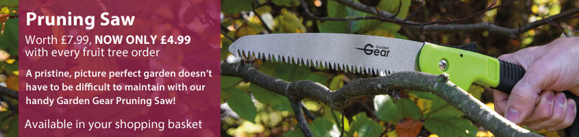 Pruning Saw ONLY £4.99 with any fruit tree order
