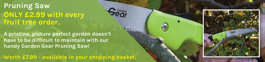 Pruning Saw ONLY £2.99 with any fruit tree order