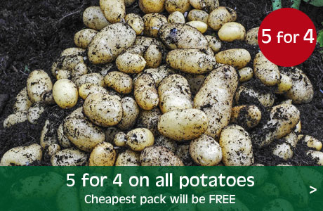 5 for 4 on all potatoes