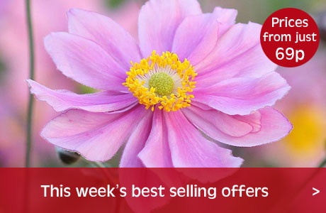 Best selling offers this week
