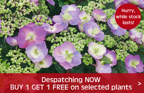 Buy 1 get 1 free on selected plants