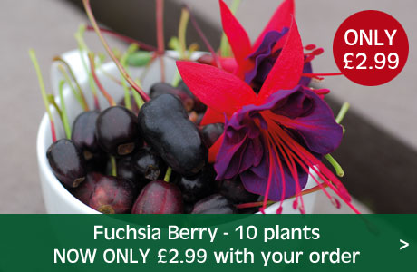 Fuchsia Berry now £2.99 with your order