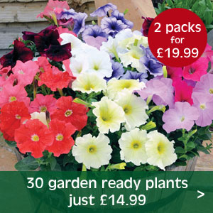 Buy any 2 packs of 30 garden ready plants for just £19.99