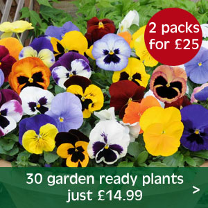 Buy any 2 packs of 30 garden ready plants for just £25