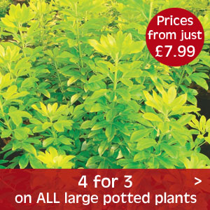 4 for 3 on large plants in our Instant Gardening Range