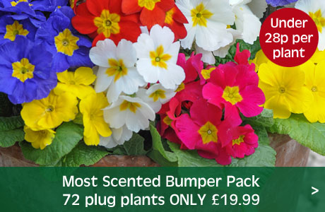 Most Scented Bumper Pack