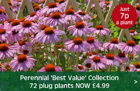 Perennial 'Best Value' Collection now £4.99