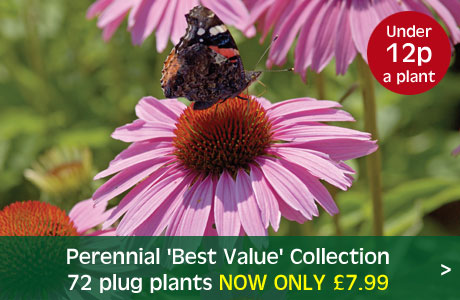 Perennial 'Best Value' Collection now £7.99