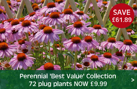 Perennial 'Best Value' Collection now £9.99