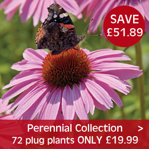Perennial Collection only £19.99