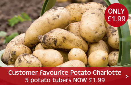 Potato Charlotte from just £1.99