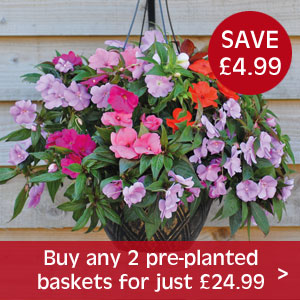Buy any 2 pre-planted pots for just £24.99