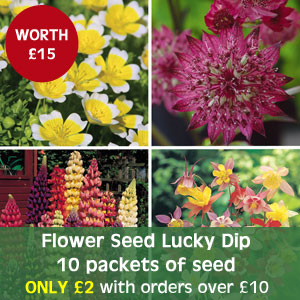 Flower Seed Lucky Dip - 10 packets of seed - only £2 with orders over £10