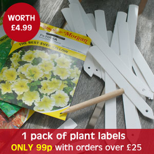 1 pack of plant labels - only 99p with orders over £25