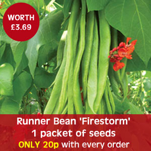 Runner Bean 'Firestorm' - 1 packet of seeds - only 20p with every order