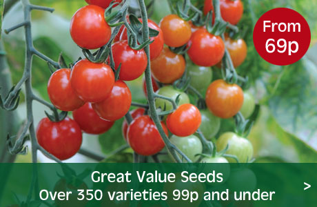 Great value seed 99p or under