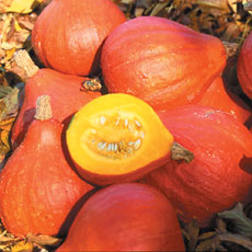 Randel Recommends - Sow squash seeds on their edge to prevent rotting