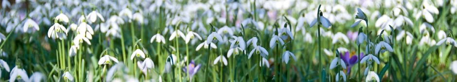 Top 10 Autumn and Winter-Flowering Bulbs