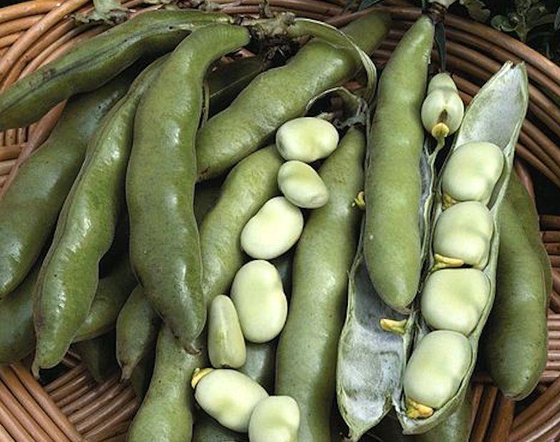 closeup of broad beans