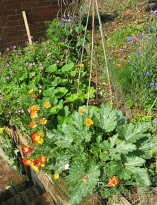 Plant Flowers Amongst Your Crops To Attract Pollinating Insects
