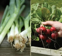 spring onions and radishes
