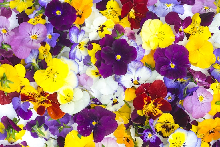 edible flowers guide
