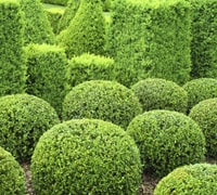 Trees Top 10 Evergreen Shrubs