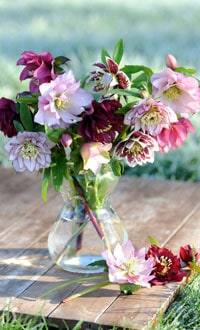 Hellebore mix in a vase