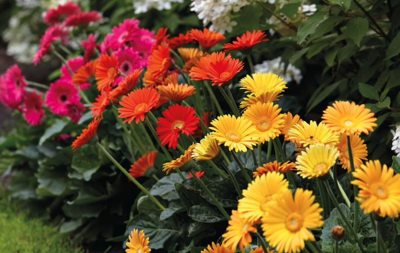 How To Grow Bedding Plants Thompson, What Is Meant By Bedding Plants